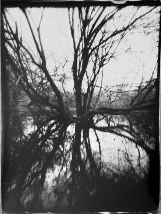 swamp-cam